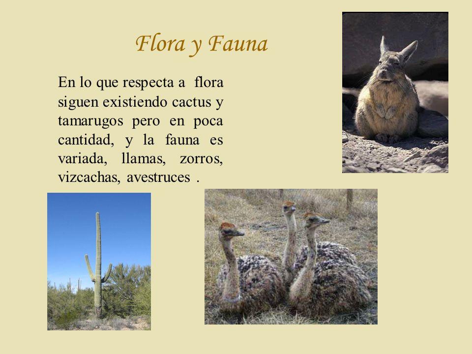 F lora y Fauna En lo que respecta a flora siguen existiendo cactus y tamarugos pero en poca cantidad, y la fauna es variada, llamas, zorros, vizcachas, avestruces.