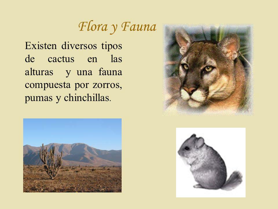 F lora y Fauna Existen diversos tipos de cactus en las alturas y una fauna compuesta por zorros, pumas y chinchillas.