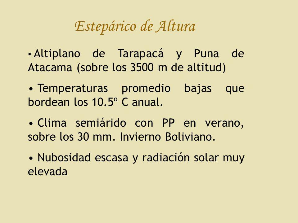 Estepárico de Altura Altiplano de Tarapacá y Puna de Atacama (sobre los 3500 m de altitud) Temperaturas promedio bajas que bordean los 10.5º C anual.
