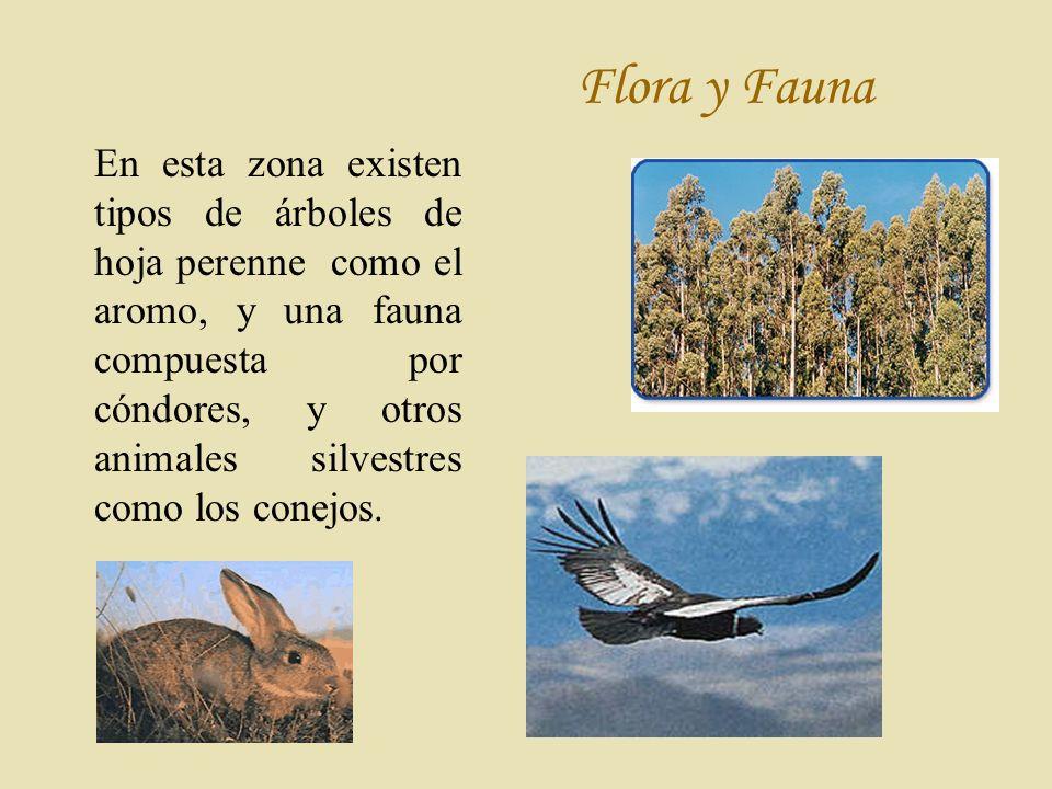 Flora y Fauna En esta zona existen tipos de árboles de hoja perenne como el aromo, y una fauna compuesta por cóndores, y otros animales silvestres como los conejos.