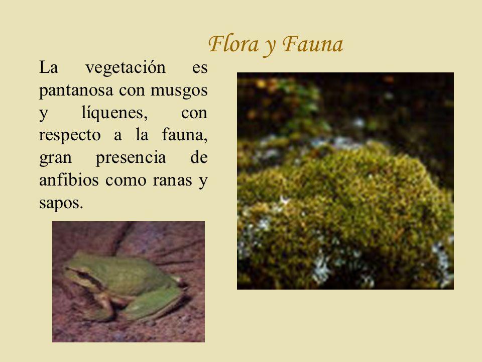 Flora y Fauna La vegetación es pantanosa con musgos y líquenes, con respecto a la fauna, gran presencia de anfibios como ranas y sapos.