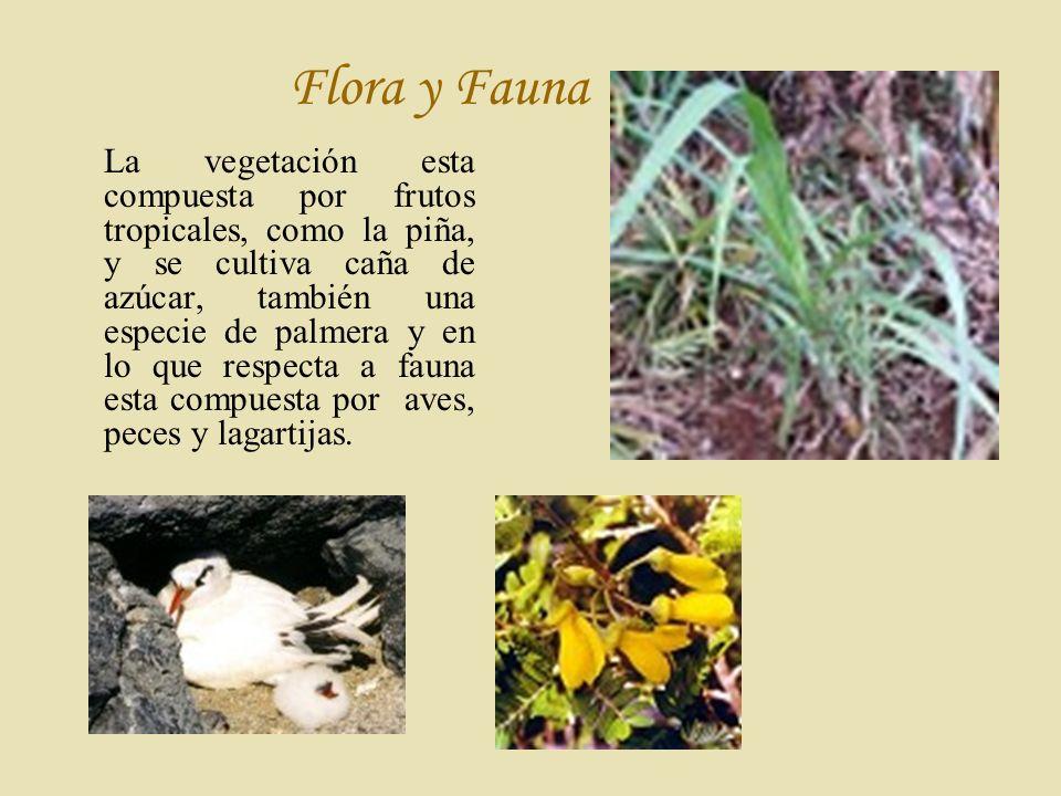 F lora y Fauna La vegetación esta compuesta por frutos tropicales, como la piña, y se cultiva caña de azúcar, también una especie de palmera y en lo que respecta a fauna esta compuesta por aves, peces y lagartijas.