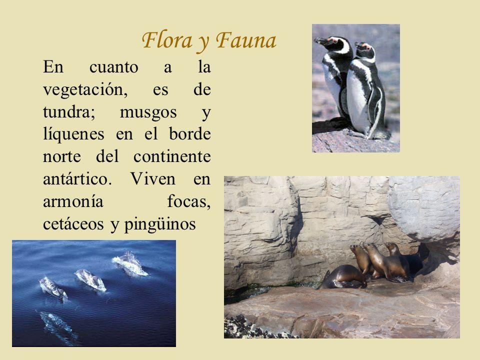 F lora y Fauna En cuanto a la vegetación, es de tundra; musgos y líquenes en el borde norte del continente antártico.