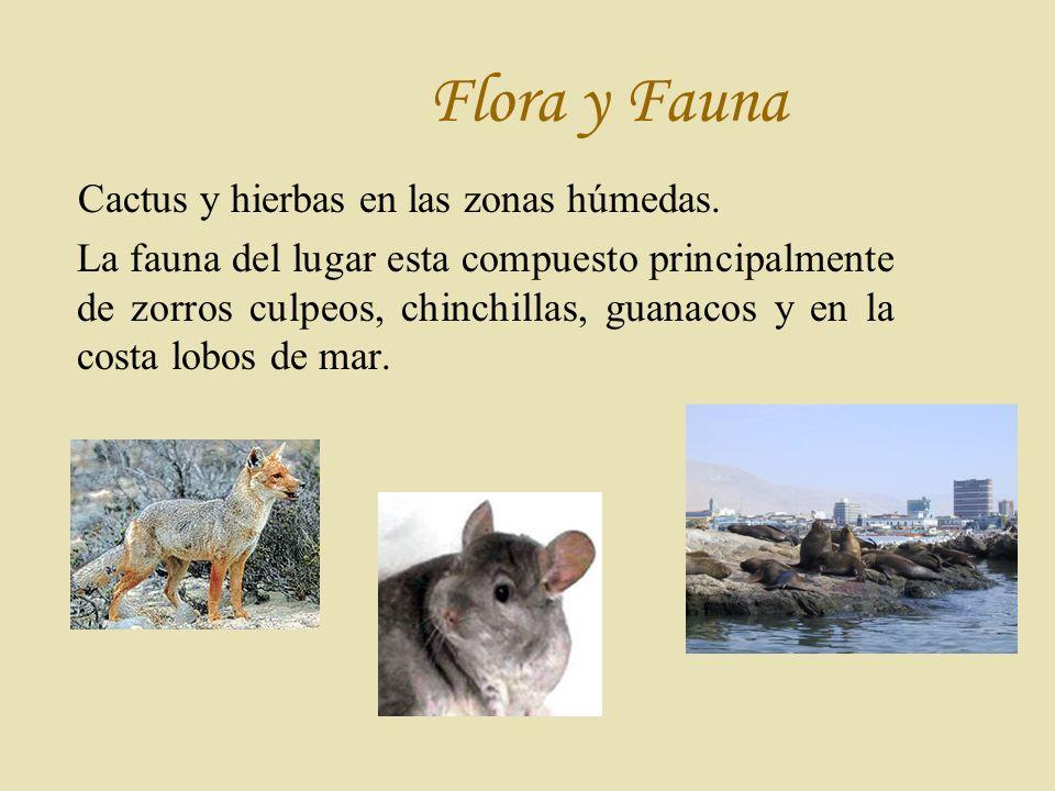 Flora y Fauna Cactus y hierbas en las zonas húmedas.