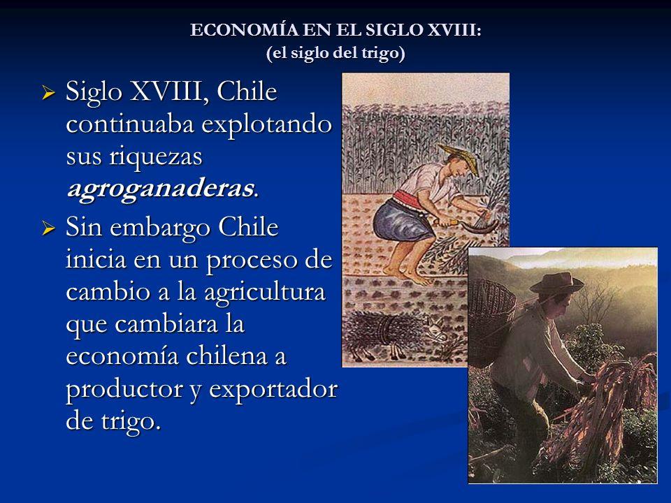 ECONOMÍA EN EL SIGLO XVIII: (el siglo del trigo) Siglo XVIII, Chile continuaba explotando sus riquezas agroganaderas. Siglo XVIII, Chile continuaba ex