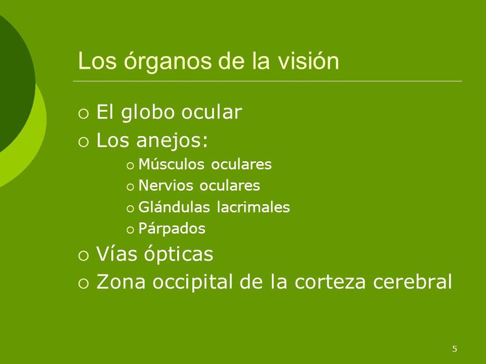 6 Requisitos para una buena visión Radiaciones de una determinada intensidad y longitud de onda Rojo: 650-700 nm Violeta: 400 nm Transparencia de los medios ópticos del ojo
