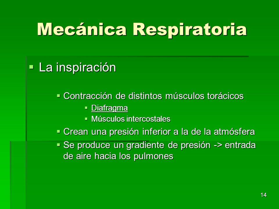 14 Mecánica Respiratoria La inspiración La inspiración Contracción de distintos músculos torácicos Contracción de distintos músculos torácicos Diafrag