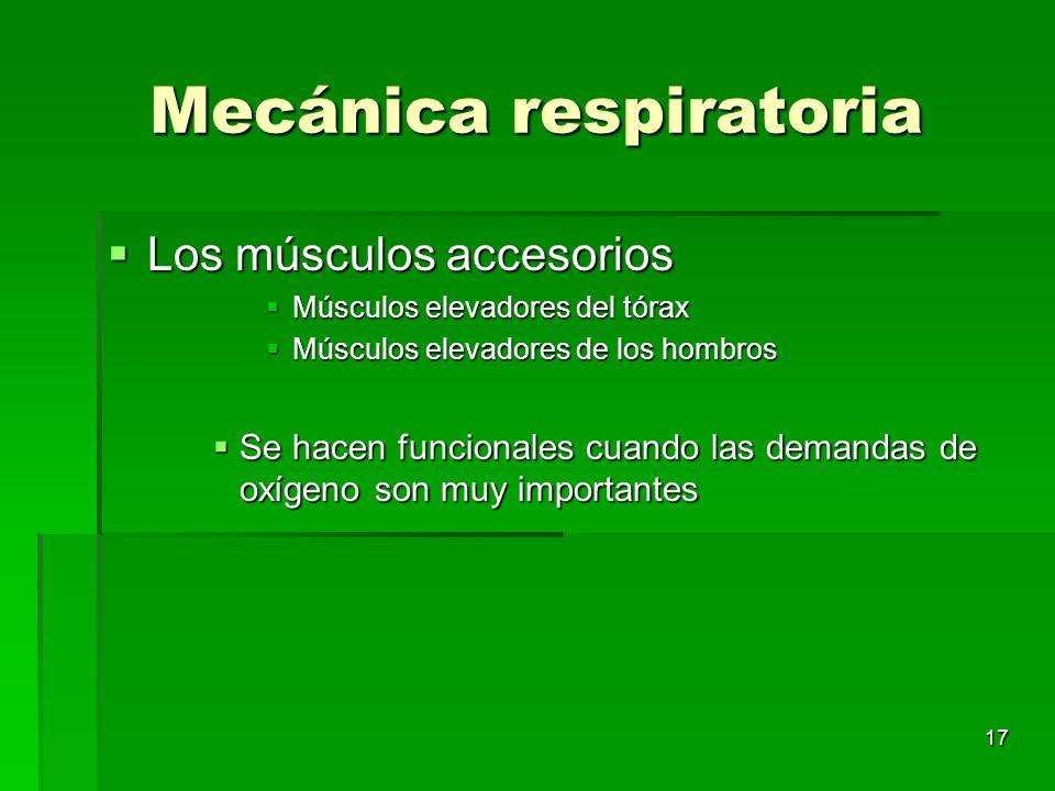 17 Mecánica respiratoria Los músculos accesorios Los músculos accesorios Músculos elevadores del tórax Músculos elevadores del tórax Músculos elevador