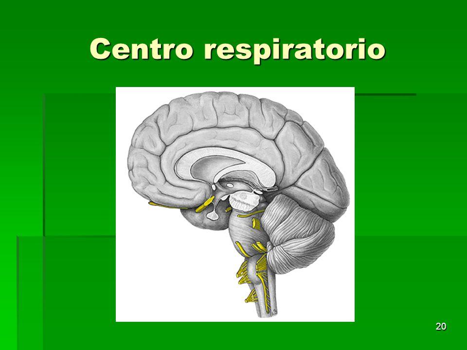 20 Centro respiratorio