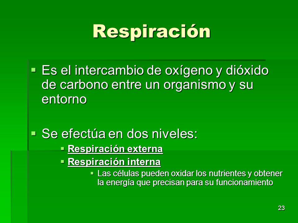 23 Respiración Es el intercambio de oxígeno y dióxido de carbono entre un organismo y su entorno Es el intercambio de oxígeno y dióxido de carbono ent