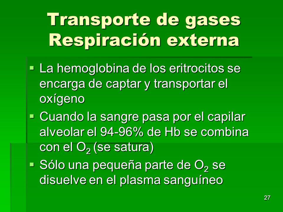 27 Transporte de gases Respiración externa La hemoglobina de los eritrocitos se encarga de captar y transportar el oxígeno La hemoglobina de los eritr