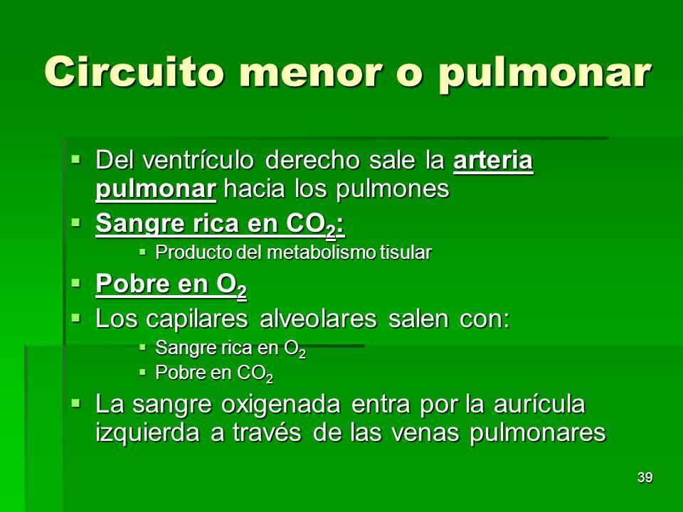 39 Circuito menor o pulmonar Del ventrículo derecho sale la arteria pulmonar hacia los pulmones Del ventrículo derecho sale la arteria pulmonar hacia