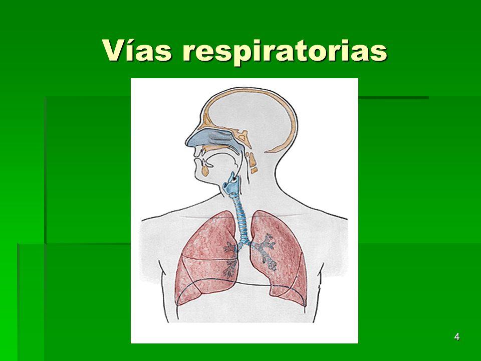 4 Vías respiratorias