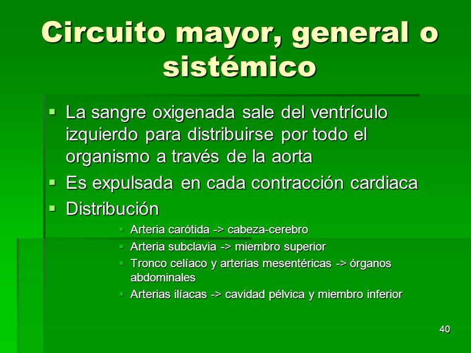 40 Circuito mayor, general o sistémico La sangre oxigenada sale del ventrículo izquierdo para distribuirse por todo el organismo a través de la aorta