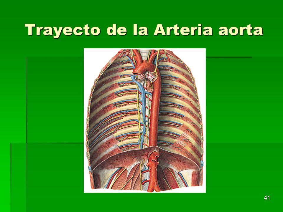 41 Trayecto de la Arteria aorta