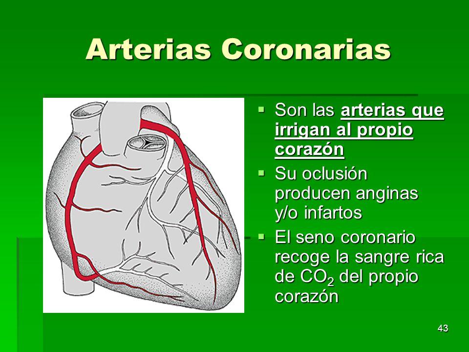 43 Arterias Coronarias Son las arterias que irrigan al propio corazón Son las arterias que irrigan al propio corazón Su oclusión producen anginas y/o