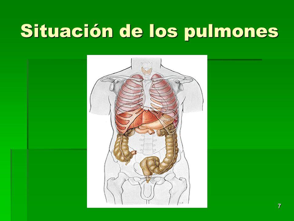 7 Situación de los pulmones