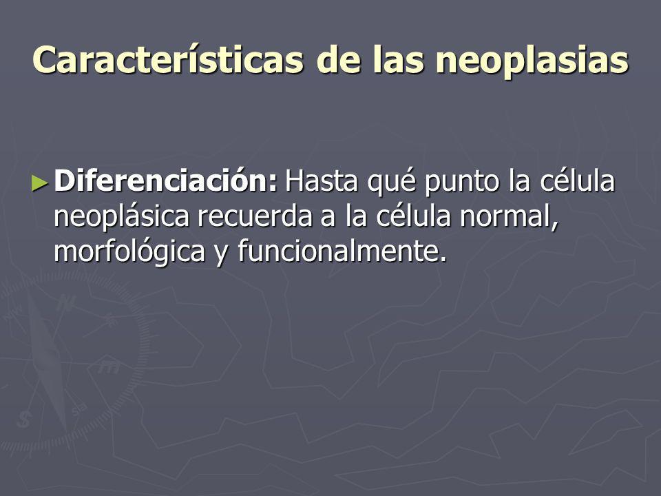 Características de las neoplasias Diferenciación: Hasta qué punto la célula neoplásica recuerda a la célula normal, morfológica y funcionalmente. Dife