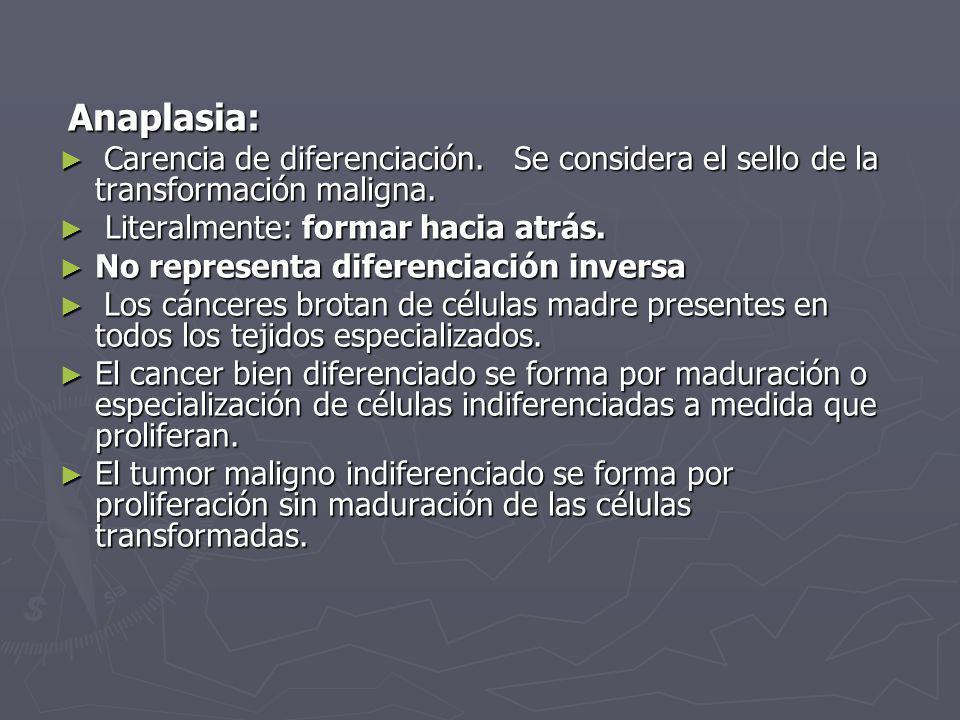 Anaplasia: Anaplasia: Carencia de diferenciación. Se considera el sello de la transformación maligna. Carencia de diferenciación. Se considera el sell