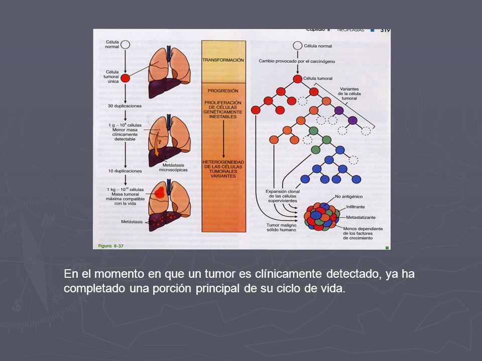 En el momento en que un tumor es clínicamente detectado, ya ha completado una porción principal de su ciclo de vida.