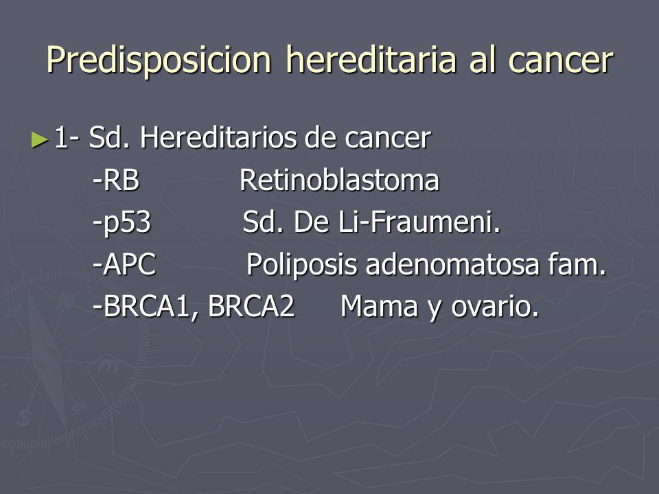 Predisposicion hereditaria al cancer 1- Sd. Hereditarios de cancer 1- Sd. Hereditarios de cancer -RB Retinoblastoma -RB Retinoblastoma -p53 Sd. De Li-