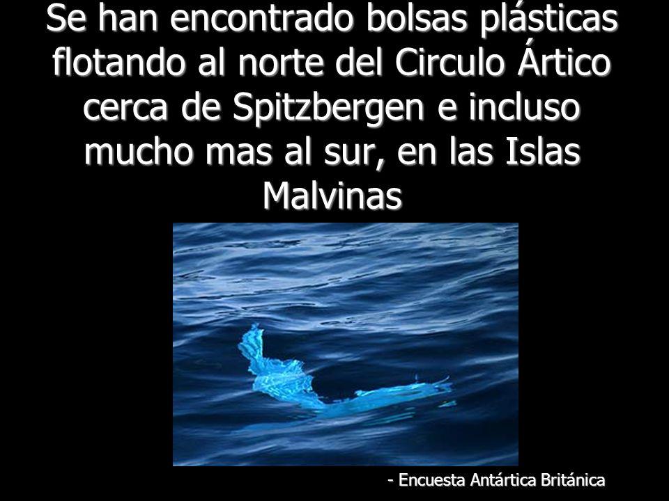 Se han encontrado bolsas plásticas flotando al norte del Circulo Ártico cerca de Spitzbergen e incluso mucho mas al sur, en las Islas Malvinas - Encuesta Antártica Británica