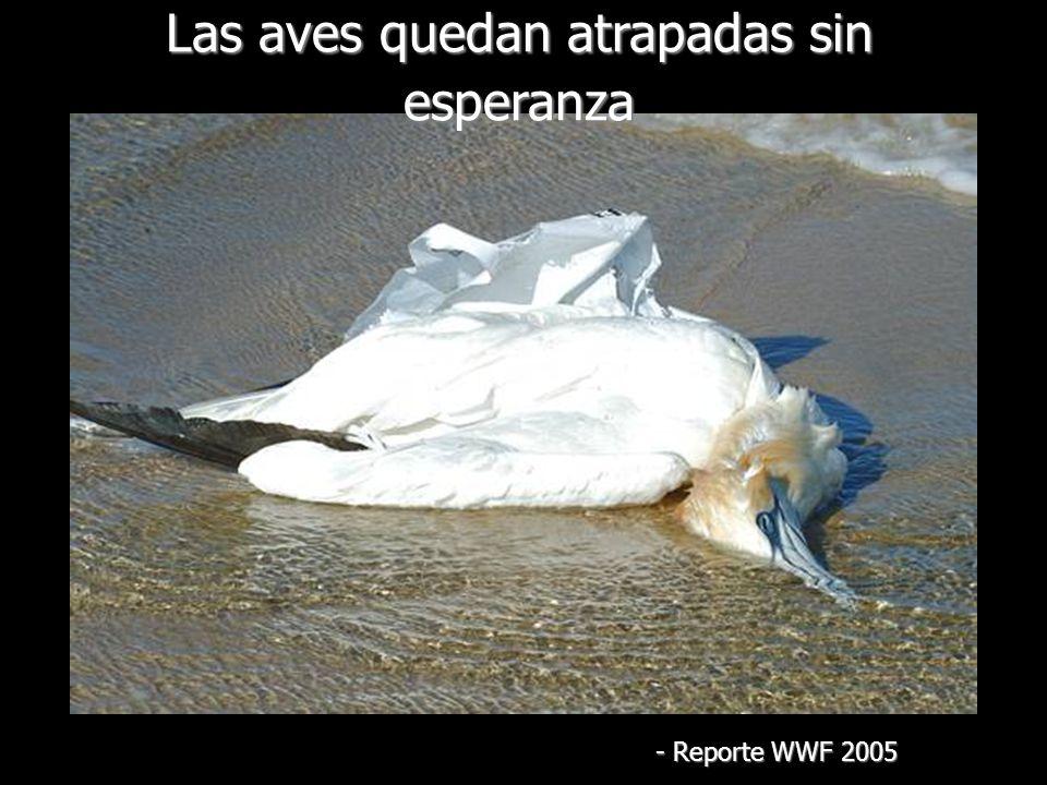 Las aves quedan atrapadas sin esperanza - Reporte WWF 2005