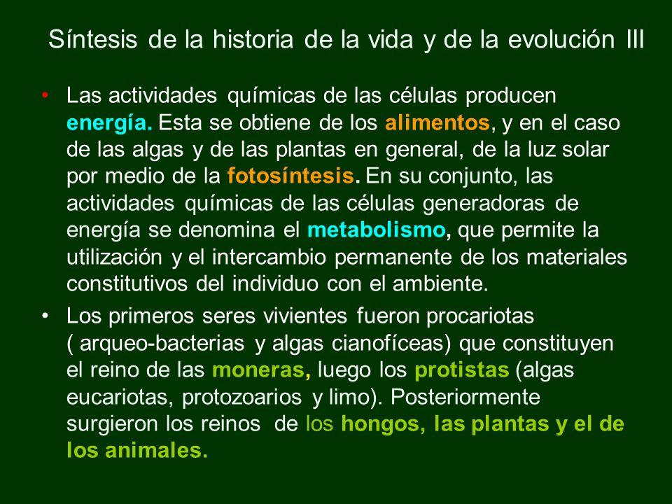 Síntesis de la historia de la vida y de la evolución III Las actividades químicas de las células producen energía. Esta se obtiene de los alimentos, y