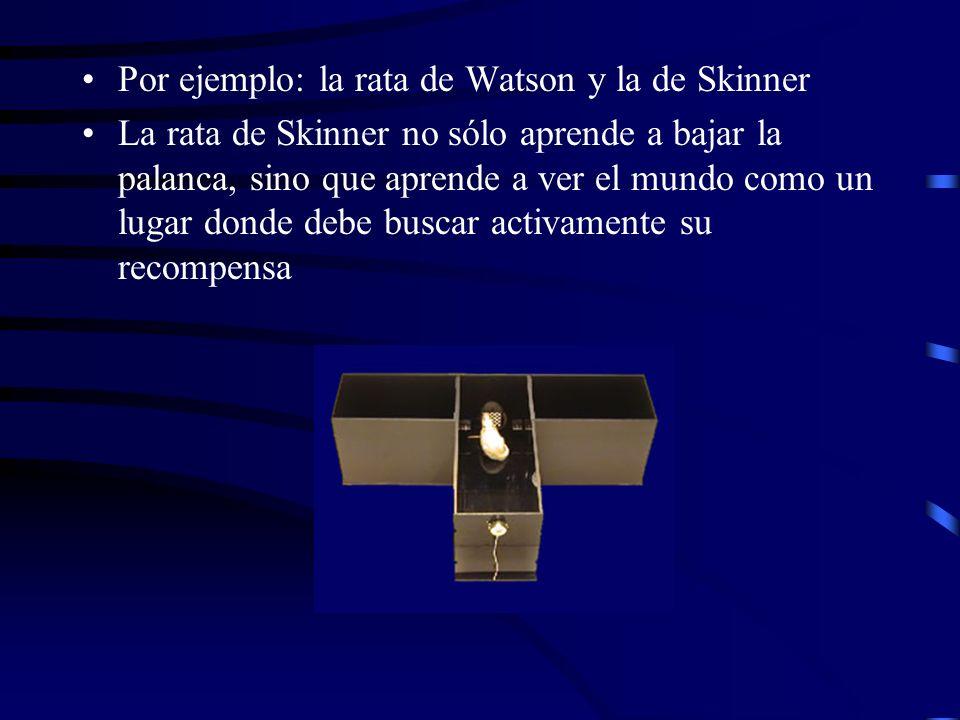 Por ejemplo: la rata de Watson y la de Skinner La rata de Skinner no sólo aprende a bajar la palanca, sino que aprende a ver el mundo como un lugar donde debe buscar activamente su recompensa