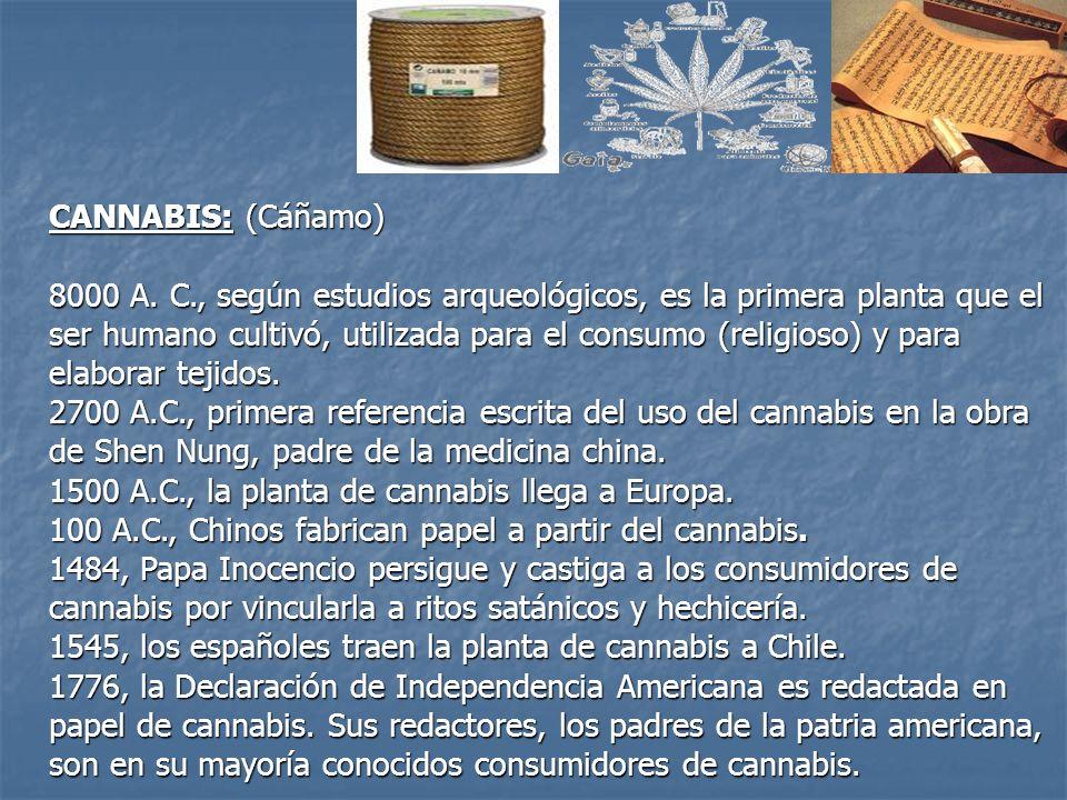CANNABIS: (Cáñamo) 8000 A. C., según estudios arqueológicos, es la primera planta que el ser humano cultivó, utilizada para el consumo (religioso) y p