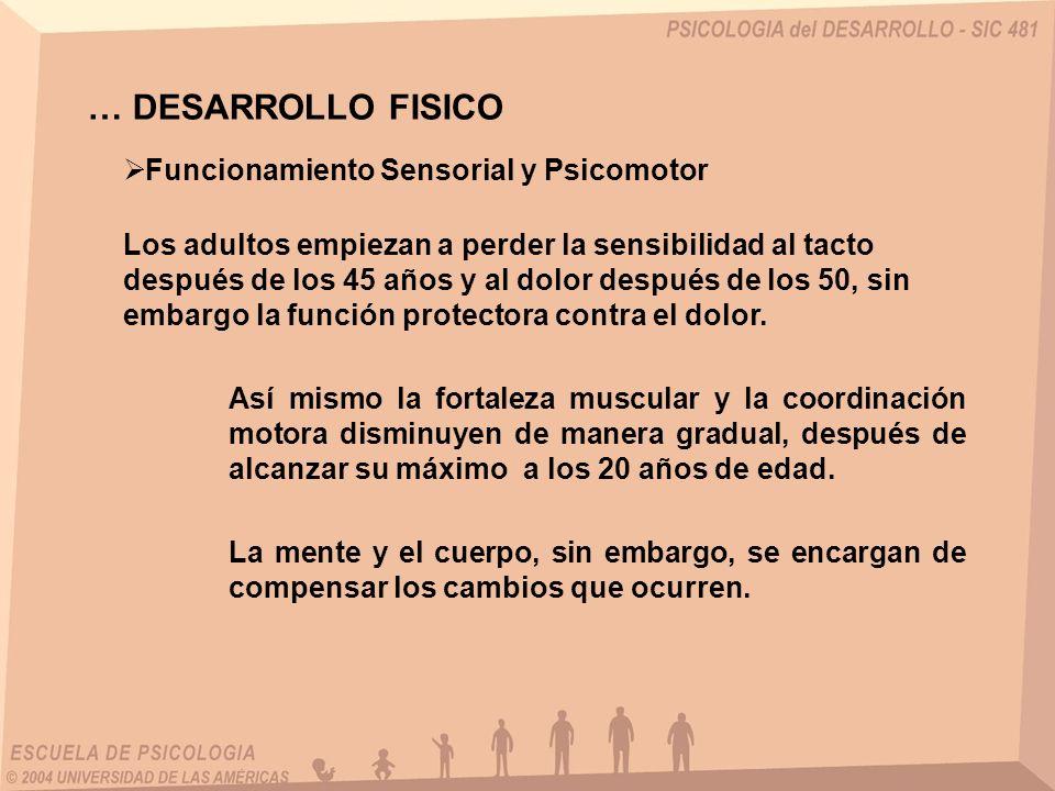 … DESARROLLO FISICO Funcionamiento Sensorial y Psicomotor Los adultos empiezan a perder la sensibilidad al tacto después de los 45 años y al dolor des