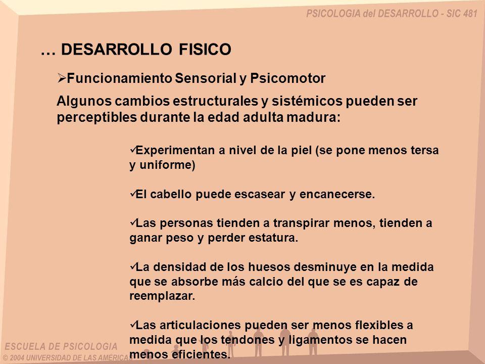 … DESARROLLO FISICO Funcionamiento Sensorial y Psicomotor Algunos cambios estructurales y sistémicos pueden ser perceptibles durante la edad adulta ma