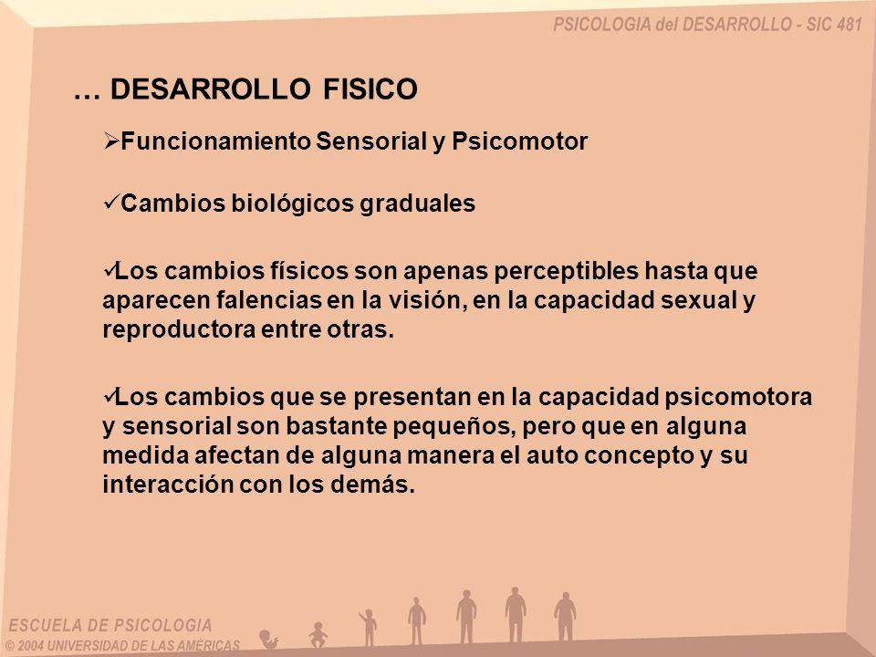 … DESARROLLO FISICO Funcionamiento Sensorial y Psicomotor Cambios biológicos graduales Los cambios físicos son apenas perceptibles hasta que aparecen falencias en la visión, en la capacidad sexual y reproductora entre otras.