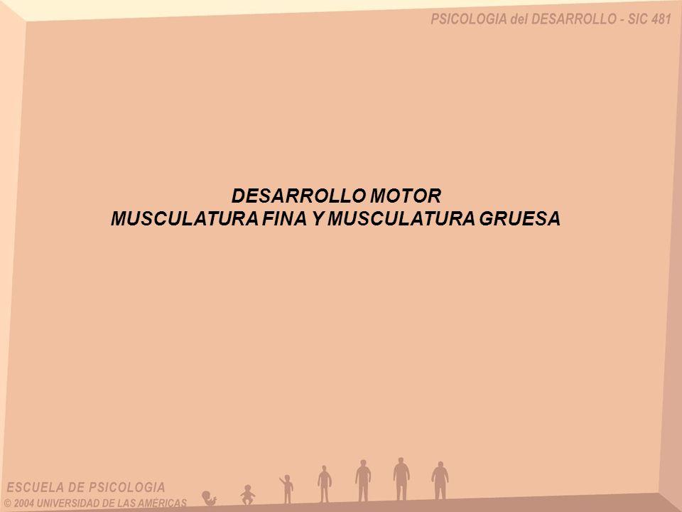 DESARROLLO MOTOR MUSCULATURA FINA Y MUSCULATURA GRUESA