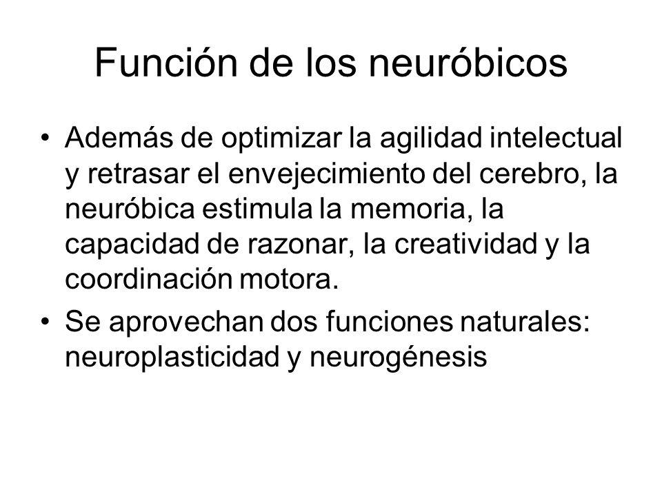Función de los neuróbicos Además de optimizar la agilidad intelectual y retrasar el envejecimiento del cerebro, la neuróbica estimula la memoria, la c