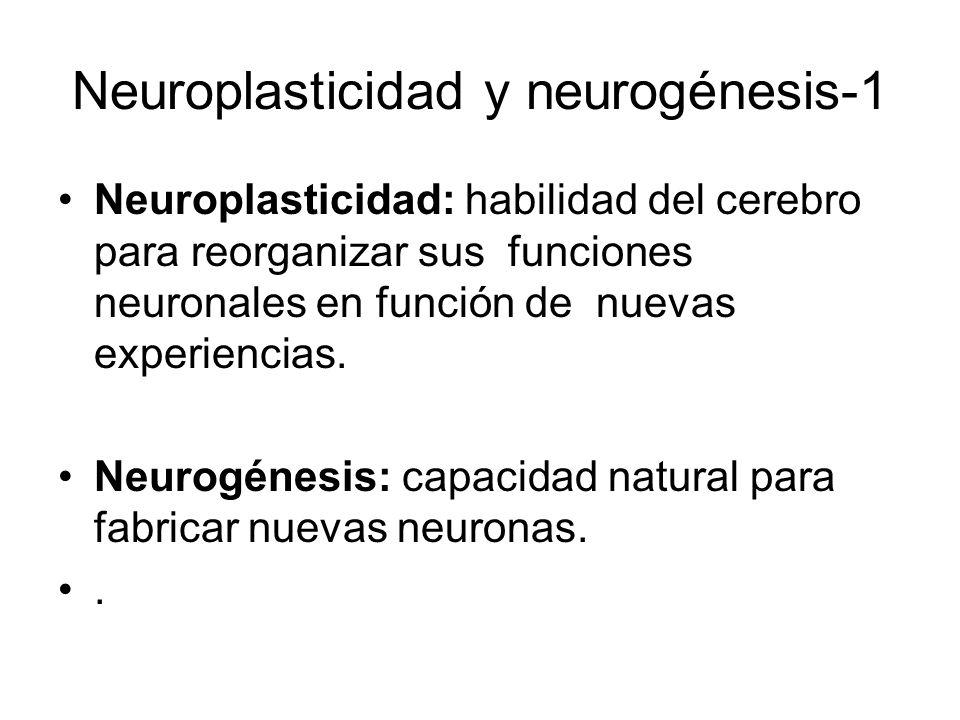 Neuroplasticidad y neurogénesis-1 Neuroplasticidad: habilidad del cerebro para reorganizar sus funciones neuronales en función de nuevas experiencias.