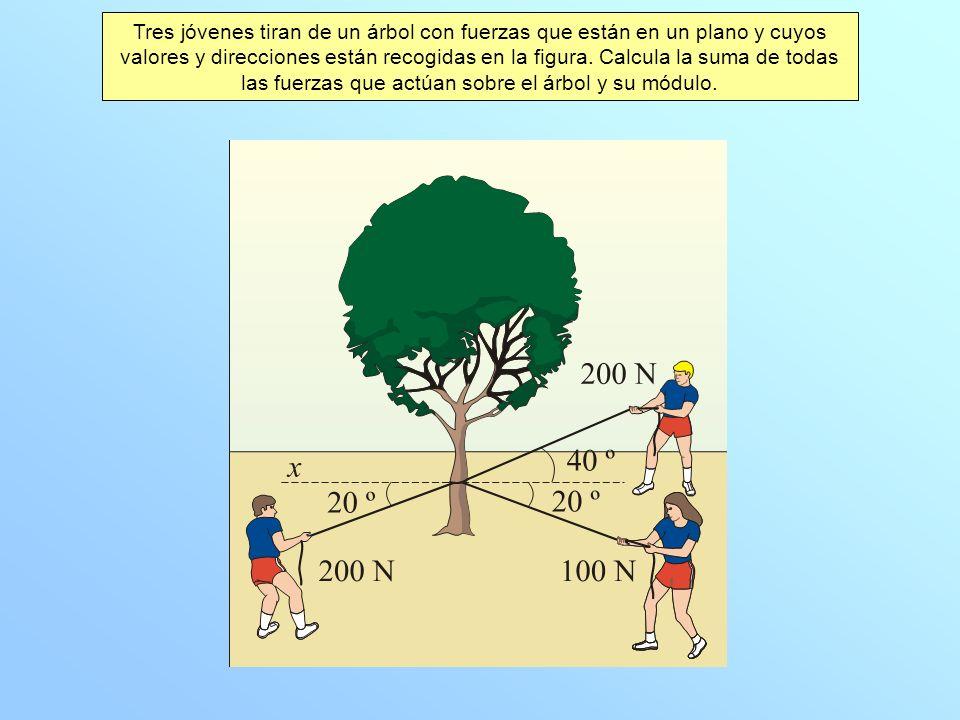 Tres jóvenes tiran de un árbol con fuerzas que están en un plano y cuyos valores y direcciones están recogidas en la figura.