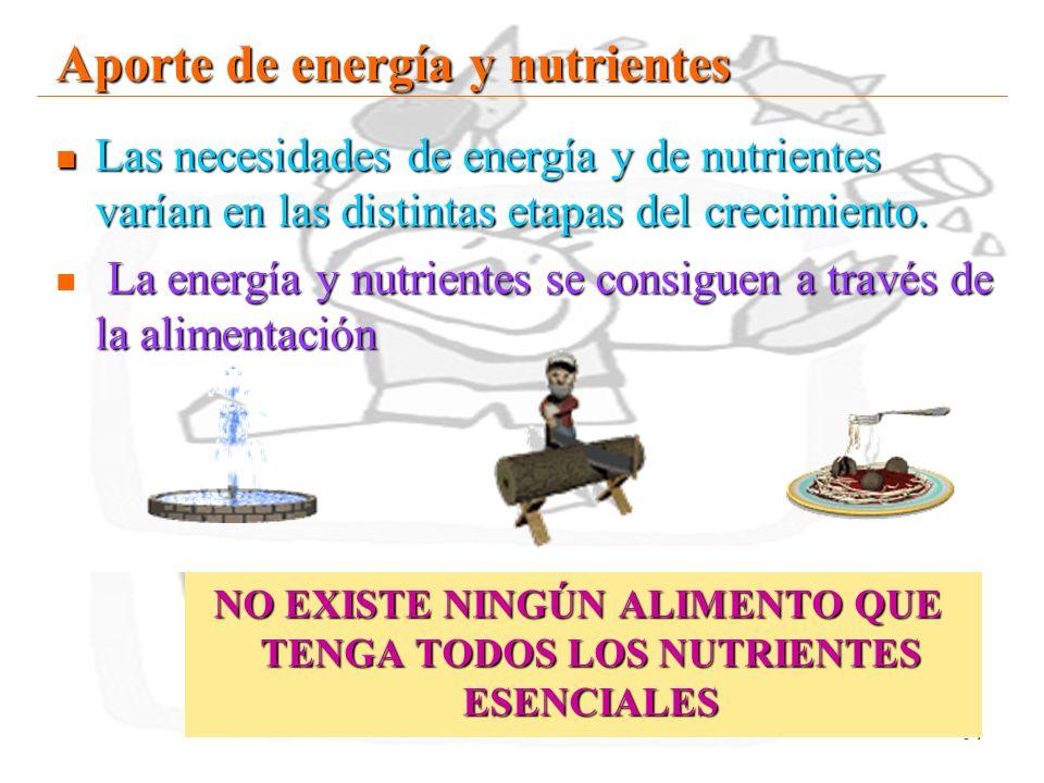 14 Aporte de energía y nutrientes Las necesidades de energía y de nutrientes varían en las distintas etapas del crecimiento. Las necesidades de energí