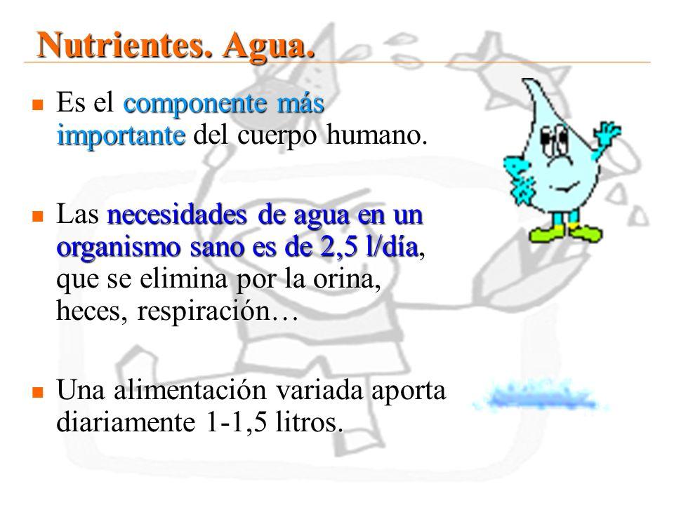 20 Nutrientes. Agua. Es el componente más importante del cuerpo humano. Es el componente más importante del cuerpo humano. Las necesidades de agua en