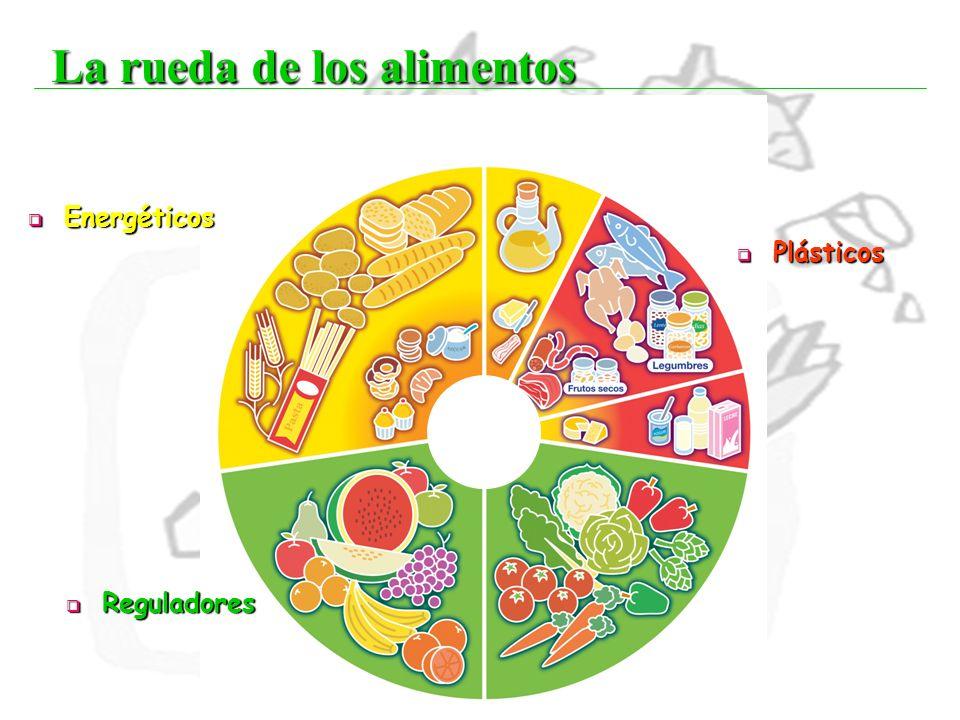 22 La rueda de los alimentos Energéticos Energéticos Reguladores Reguladores Plásticos Plásticos