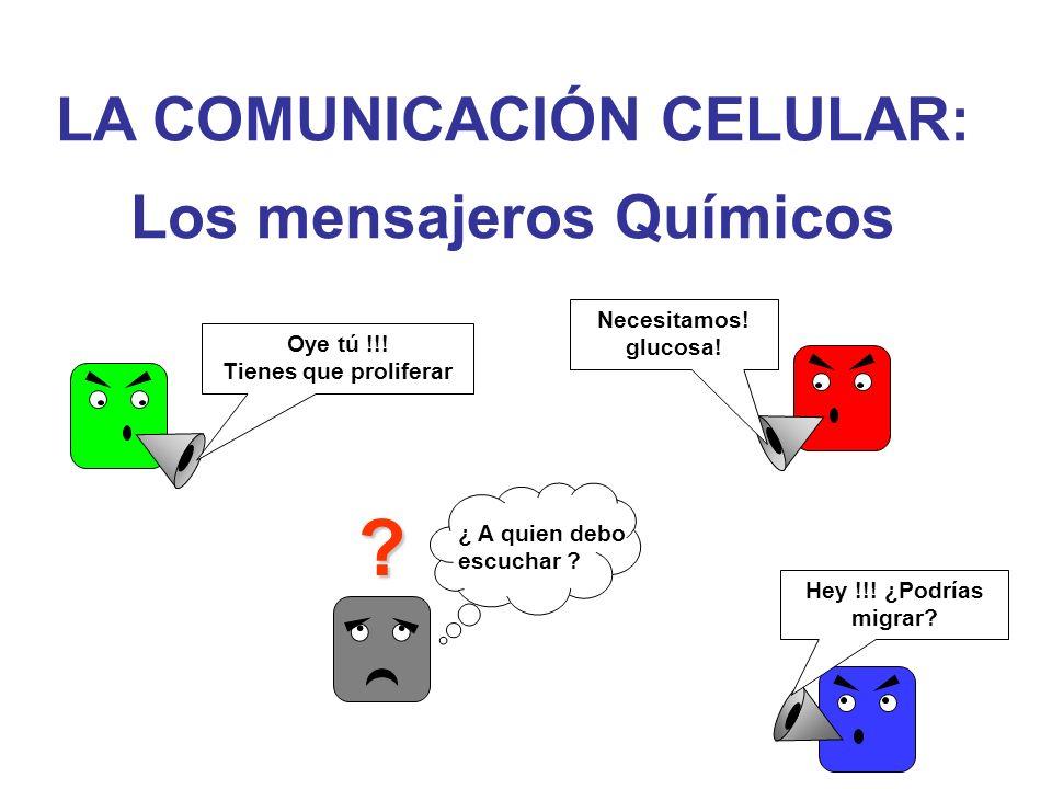 LA COMUNICACIÓN CELULAR: Los mensajeros Químicos ? Oye tú !!! Tienes que proliferar Necesitamos! glucosa! Hey !!! ¿Podrías migrar? ¿ A quien debo escu