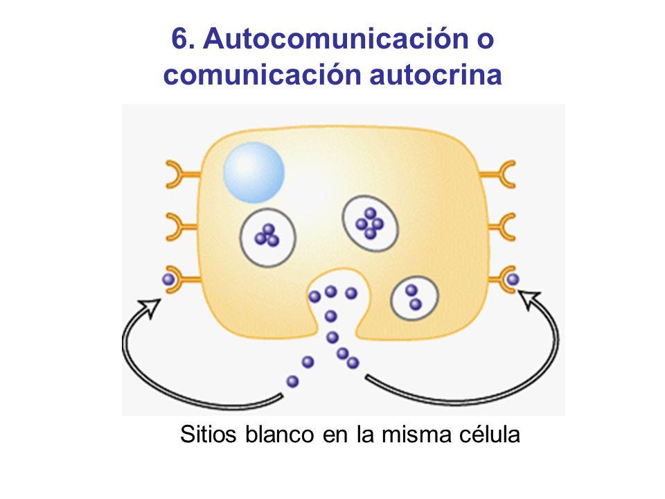 Sitios blanco en la misma célula 6. Autocomunicación o comunicación autocrina