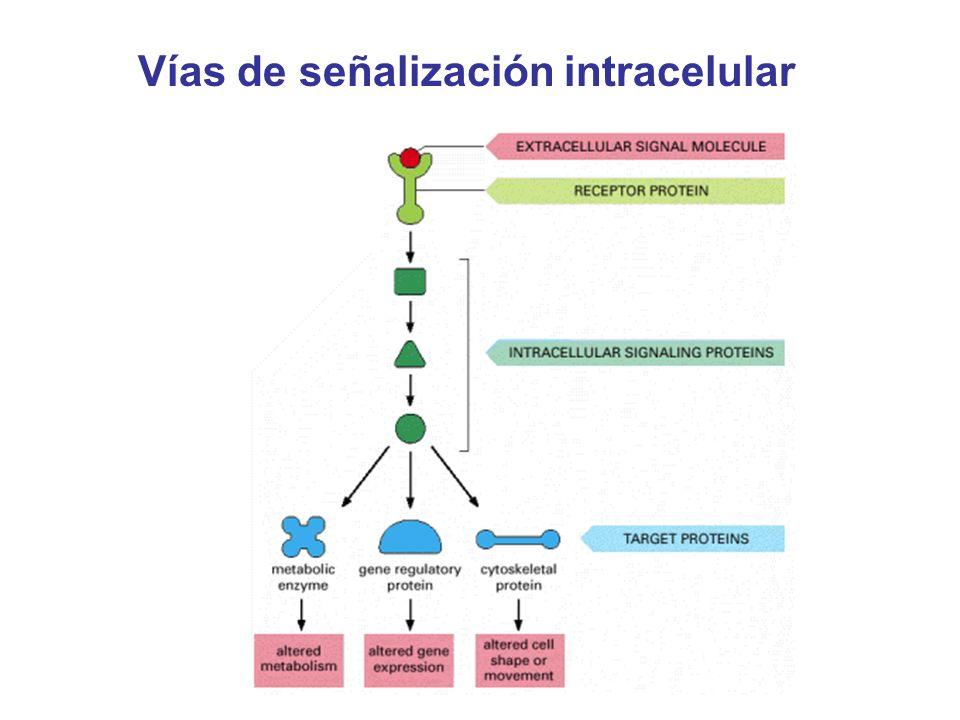 Vías de señalización intracelular