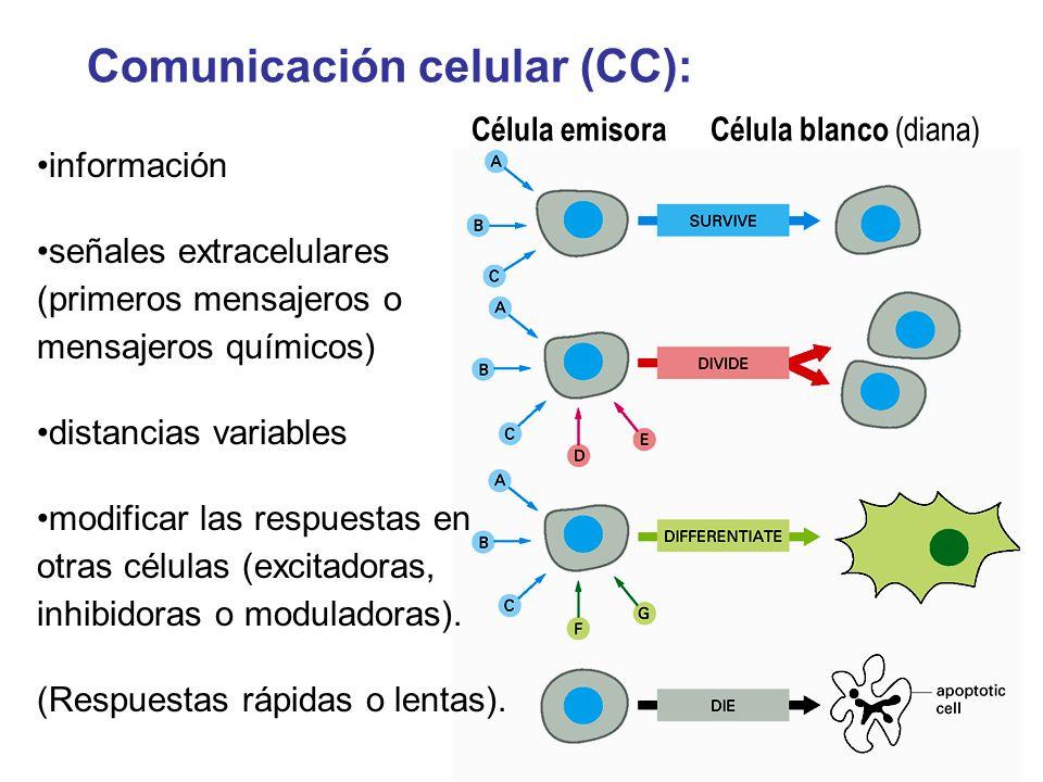 Comunicación celular (CC): Célula emisora Célula blanco (diana) información señales extracelulares (primeros mensajeros o mensajeros químicos) distanc