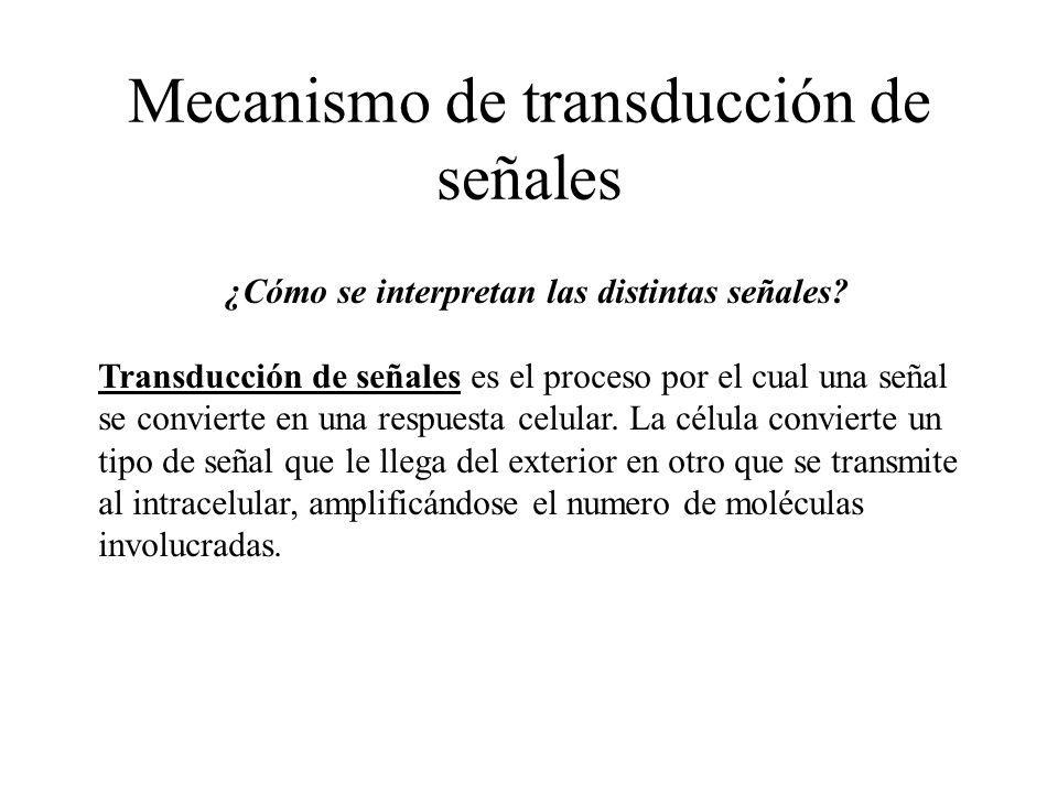 Mecanismo de transducción de señales ¿Cómo se interpretan las distintas señales? Transducción de señales es el proceso por el cual una señal se convie