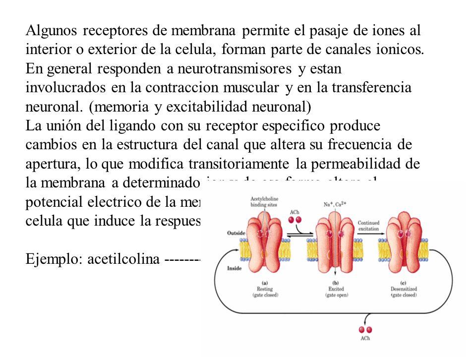 Algunos receptores de membrana permite el pasaje de iones al interior o exterior de la celula, forman parte de canales ionicos. En general responden a