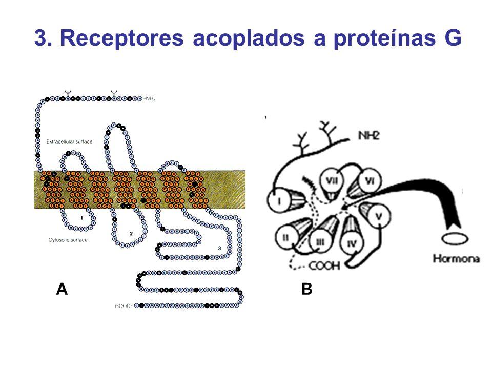 AB 3. Receptores acoplados a proteínas G