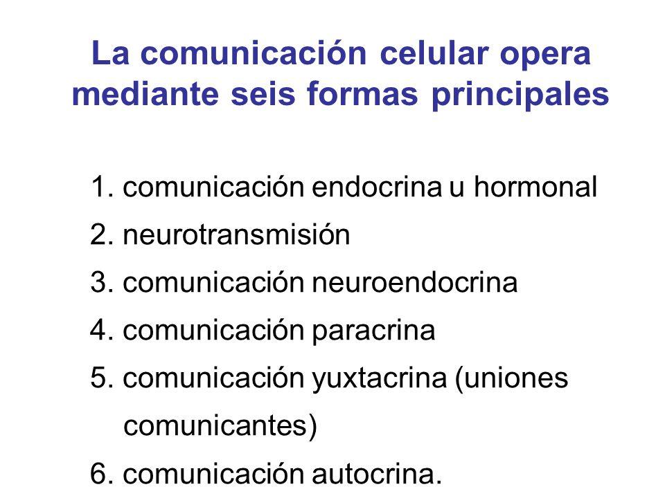1. comunicación endocrina u hormonal 2. neurotransmisión 3. comunicación neuroendocrina 4. comunicación paracrina 5. comunicación yuxtacrina (uniones