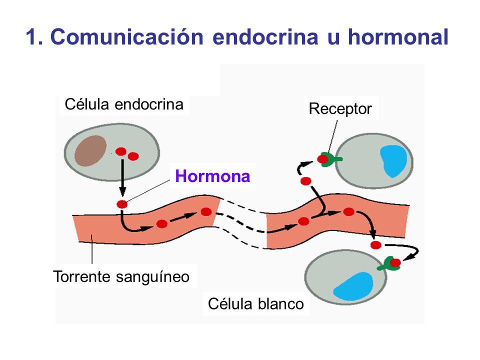 1. Comunicación endocrina u hormonal Célula endocrina Receptor Torrente sanguíneo Célula blanco Hormona