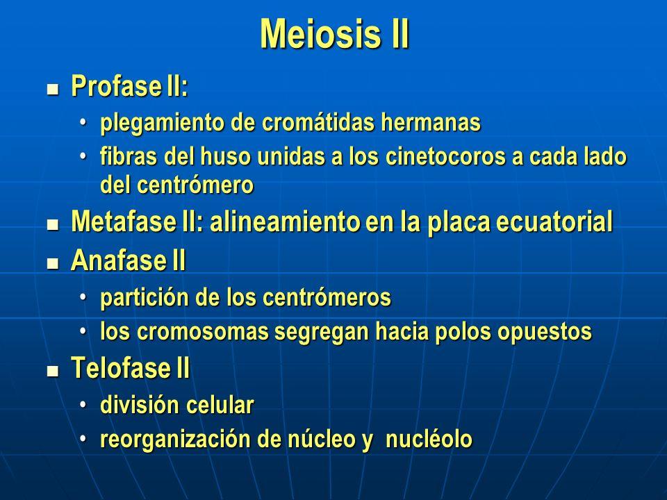 Consecuencias de la meiosis Formación de cuatro células haploides, cada una con una copia completa del genoma Formación de cuatro células haploides, cada una con una copia completa del genoma Recombinación Recombinación entrecruzamiento en la profase I entrecruzamiento en la profase I distribución independiente de los cromosomas no homólogos distribución independiente de los cromosomas no homólogos La meiosis ocurre en un determinado momento en el ciclo de vida de todos los organismos que se reproducen sexualmente.